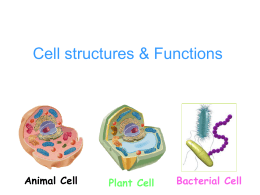 Cell structures & Functions