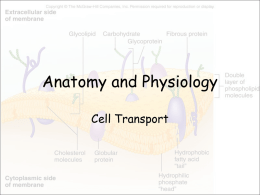 Cell Transport PPT - Effingham County Schools