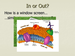 In or Out? How is a window screen similar to a cell membrane?