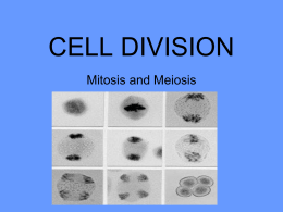 CELL DIVISION intro