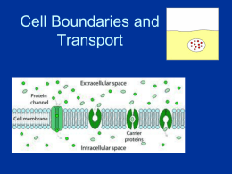 3. Cell membranes