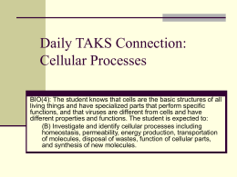 Daily TAKS Connection: DNA