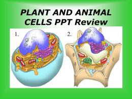 PLANT AND ANIMAL CELLS PPT Review