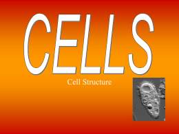 Cell powerpoint 1 Cells PP Final