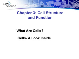 7.1 What are cells?