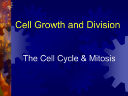 Cell Gowth & Division ppt