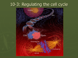 Regulating the cell cycle - Sonoma Valley High School