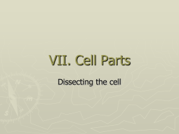 Cell basics & structure