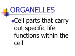 organelles - GEOCITIES.ws