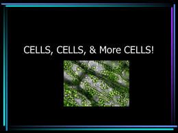 CELLS, CELLS, & More CELLS!