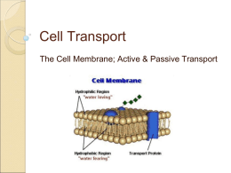 Cell Transport - Bartlett High School