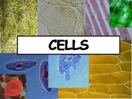 Cell_Theory_and_Microscopes_2011