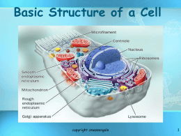 Chapter 3 The Basic Structure of a Cell