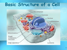 Cell structure - sciencewithskinner