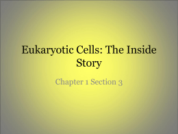 Eukaryotic Cells: The Inside Story