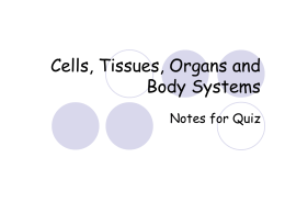 Cells, Tissues, Organs and Body Systems