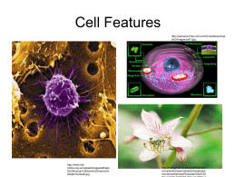 Cell Features Presentation