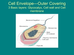 Cell Envelope—Outer Covering 3 Basic layers: Glycocalyx, Cell wall