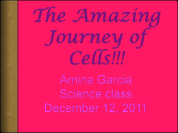 The Cell Reproduction Adventure!!!