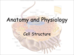 Anatomy and Physiology - Effingham County Schools
