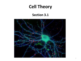 Notes Section 3.1: Cell Theory