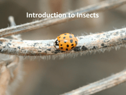 06 Introduction to Insects