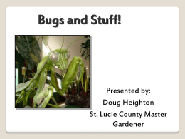 Bugs and Stuff! - St. Lucie County Extension Office