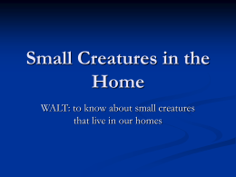 Small Creatures in the Home