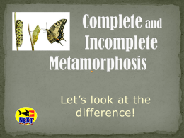 Metamorphosis-PowerPoint1