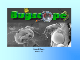Bugscope - WordPress.com