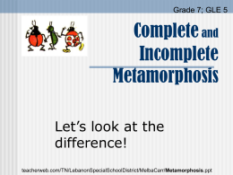 Metamorphosis - WBR Teacher Moodle