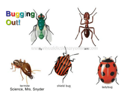 insects (power point - Mrs. Snyder`s science page