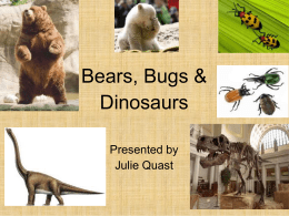 Bears Bugs and Dinosaurs - TheReadingLady