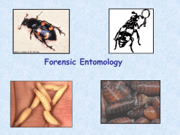 forensic_entomology_teacher_presentation