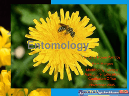 Entomology - Chicago High School for Agricultural Sciences