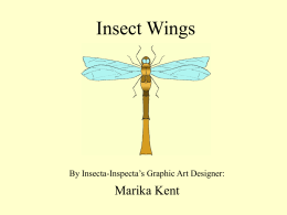 Click here - Insecta Inspecta World