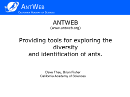 Flexible image comparisons in AntWeb