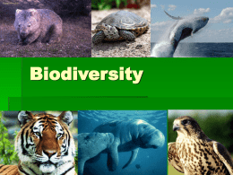 What causes the loss of biodiversity?
