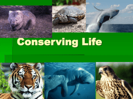 Biodiversity and HIPPO PowerPoint