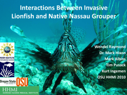 Effects of between invasive lionfish and native Nassau grouper