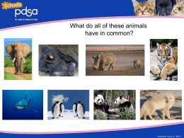 Endangered animal PowerPoint