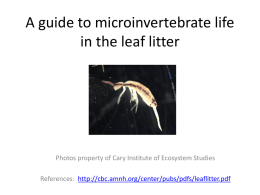 Soil litter invertebrate guide - Cary Institute of Ecosystem Studies