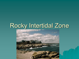 Rocky Intertidal Zone