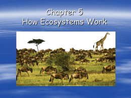 "Chapter 5: ""How Ecosystems Work"""
