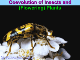 Coevolution of Insects and Flowering Plants