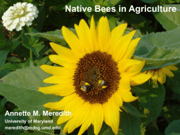 Native Bees in Agriculture