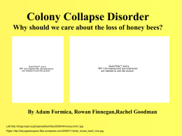Decline in and Value of Honeybees