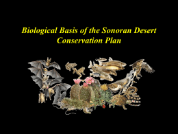 Sonoran Desert Conservation Plan