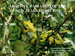 ADAPTIVE RADIATION OF THE NEW ZEALAND GECKOS