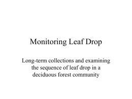 Monitoring Leaf Drop